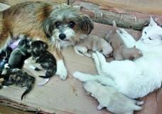 Кошка и собака по очереди заботятся о своем потомстве