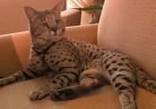 Кот украл у людей сотни личных вещей